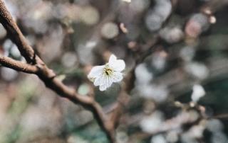 primavera a parma