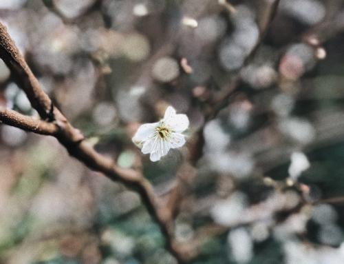 Primavera a Parma 2019: 4 iniziative da non perdere